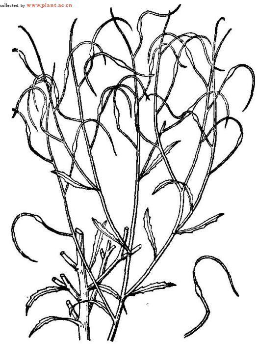小树成长flash_植物生长过程画相关图片展示_植物生长过程画图片下载
