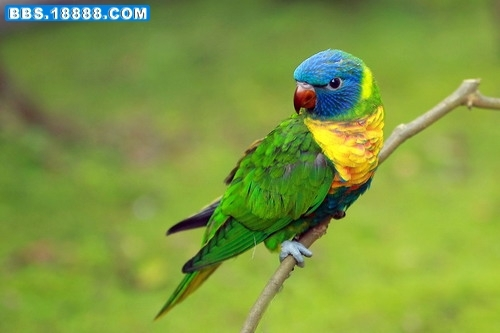 动物工艺彩虹设计手稿图片
