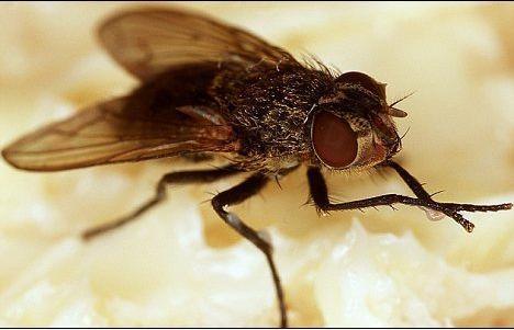昆虫微型飞行器