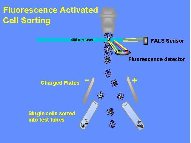 流式细胞染色步骤