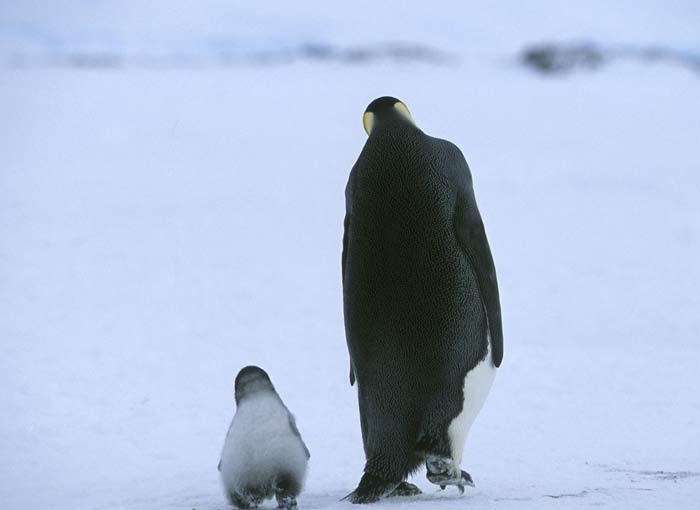 qq头像企鹅离开