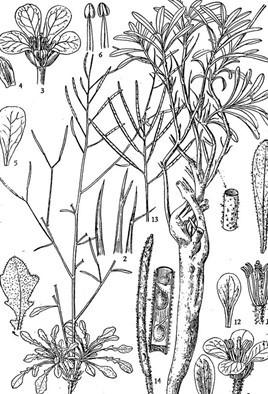 手绘灌木丛图例