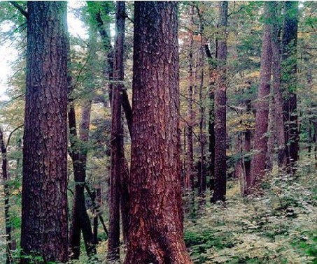 牡丹峰国家森林公园