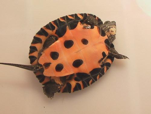 乌龟冬眠什么时候会醒
