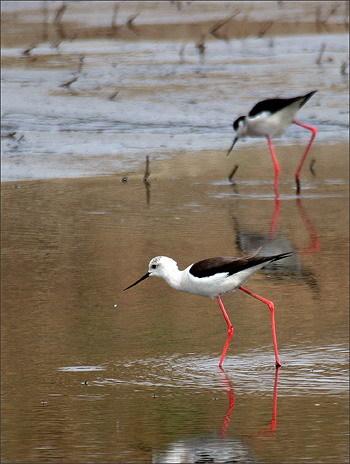 衡水湖湿地和鸟类保护区