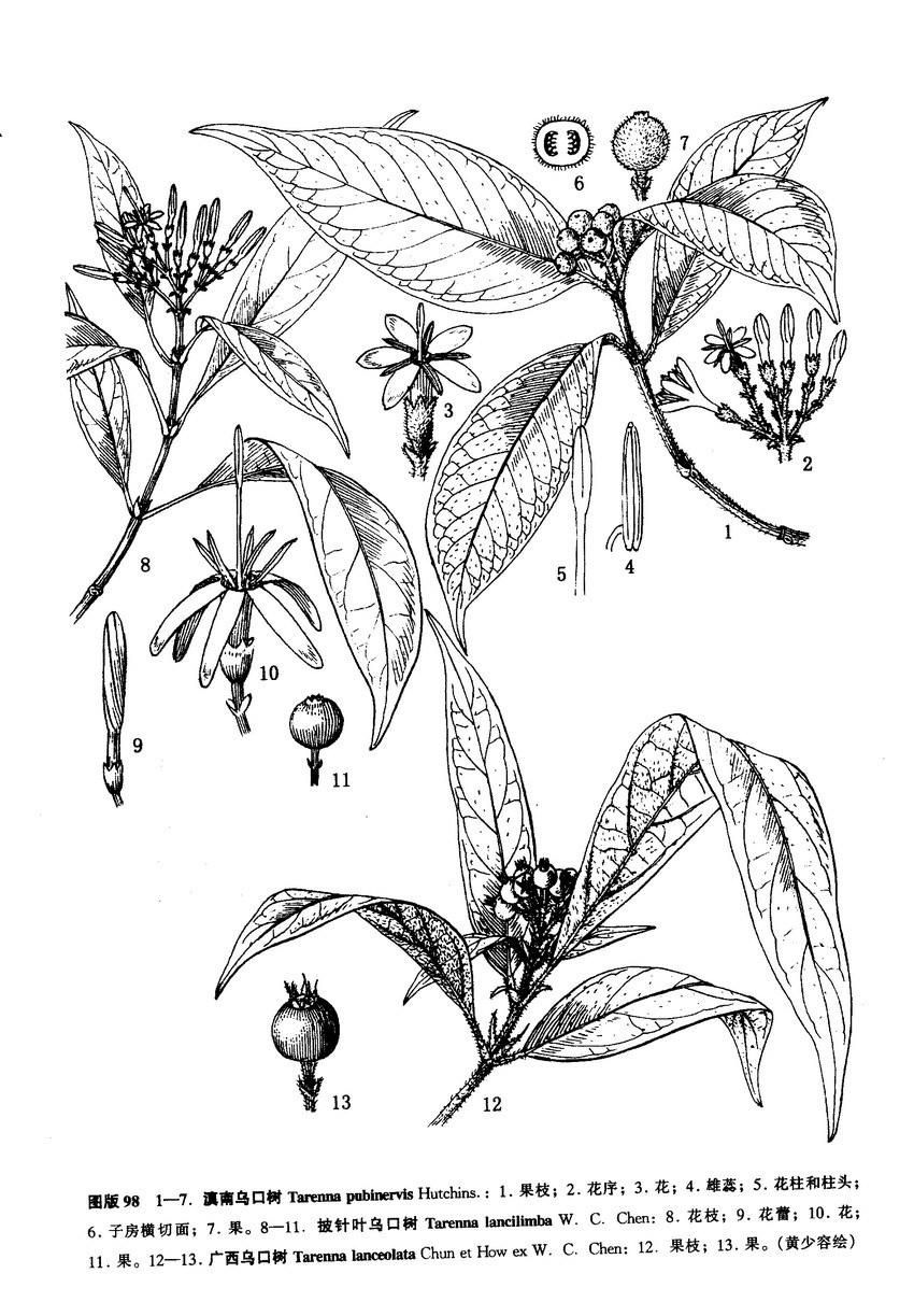 手绘园林植物黑白