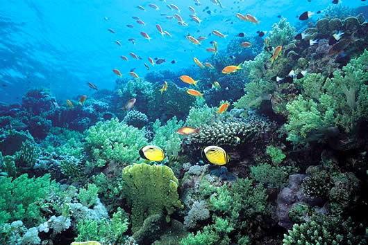壁纸 海底 海底世界 海洋馆 水族馆 桌面 530_354