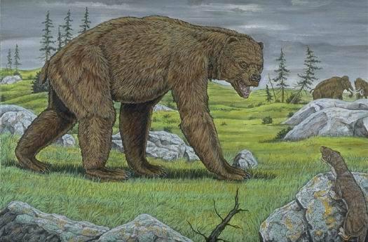 巨型短面熊的身体结构以及其发达的犬齿
