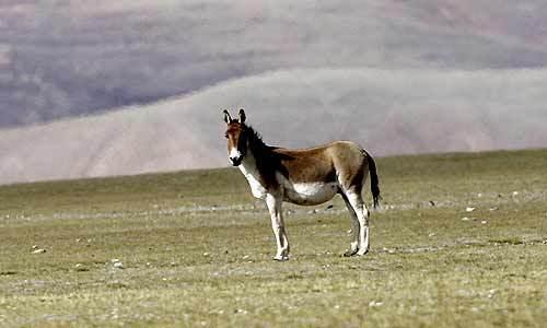 羌塘自然保护区_360百科