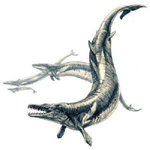 齿鲸简笔画步骤