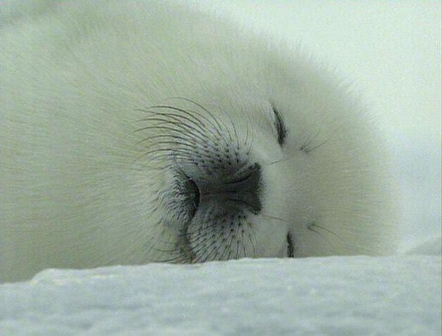 可爱的海洋哺乳动物 - 游戏