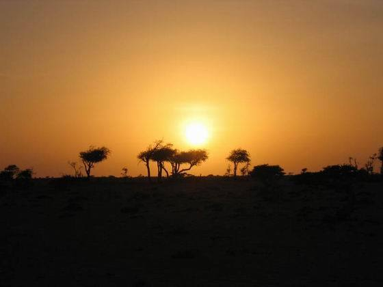 动物属于典型的阿拉伯半岛类型