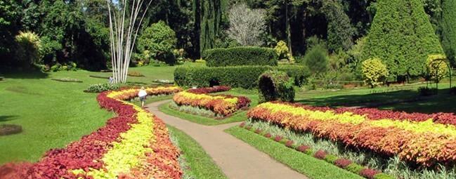 佩拉德尼亚王家植物园