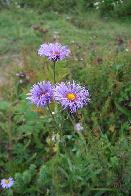 微信头像花朵长发