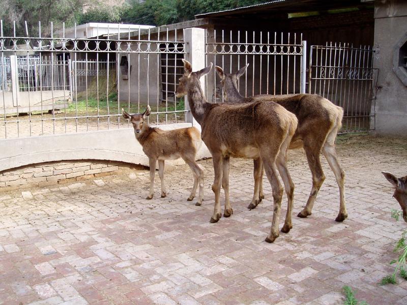 小小动物园 位于鸟类动物观赏区的西侧,里边设置了动物保育苑,动物