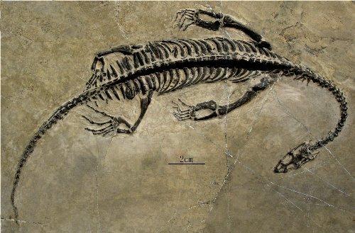 脊椎动物化石(包括长达6米的有关节的大型骨骼化石)