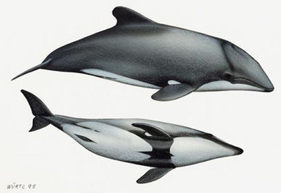 海豚气孔结构图