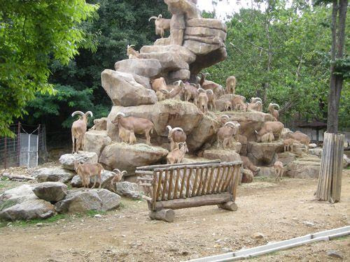 首尔动物园_360百科