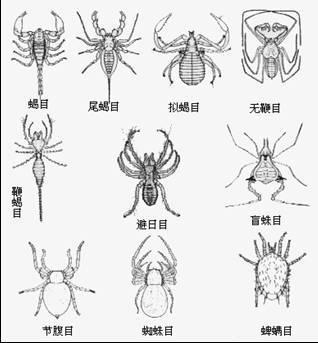 节肢动物附肢演化的结构