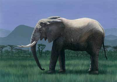 那么.世界陆地上最大的动物是谁呢?是非洲大象