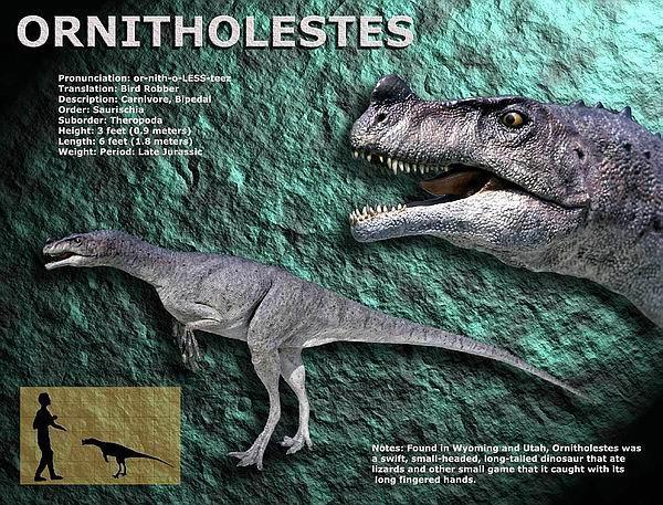 类动物    生存年代: 约1亿5000万年前