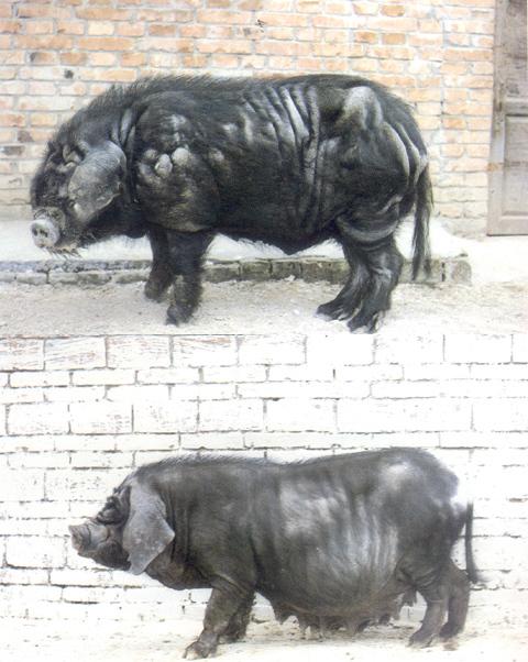 汉水动物相片