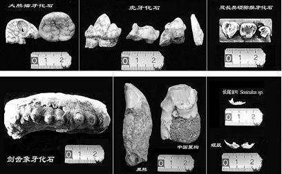 古脊椎动物化石罪