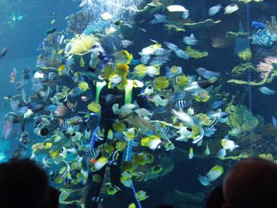 一个个玻璃水槽向人们展现各种海洋动物的生活情景:鲈鱼银闪闪,真鲷红